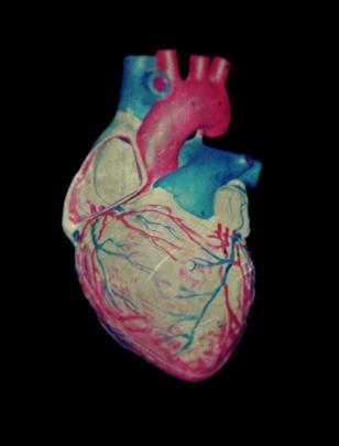 heart-bio1