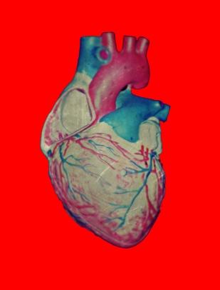 heart-bio1a