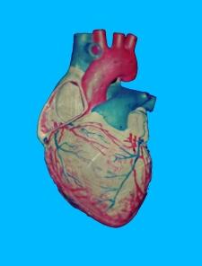 heart-bio1b