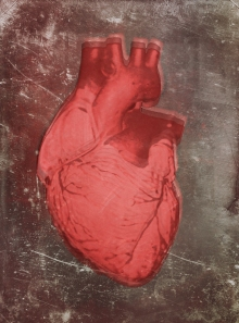 heart-bio5