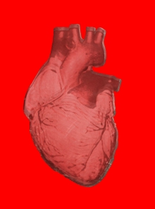 heart-bio5a